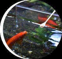 アクア 熱帯魚 水草