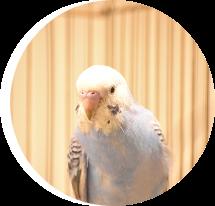 小動物 ハムスター ウサギ 小鳥