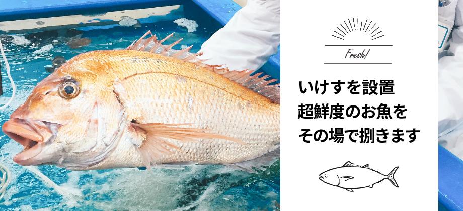 いけすを設置 超鮮度のお魚をその場で捌きます